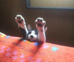 cat, fur, and kitten image