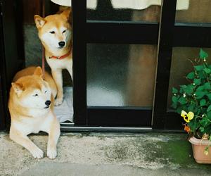 dog, japan, and photography image