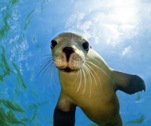 animal, seal, and ocean image