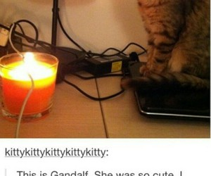 funny, cat, and animal image