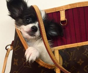 bag, dog, and Louis Vuitton image