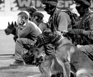 dogs, war, and military love image