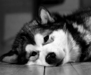 dog, animal, and black and white image