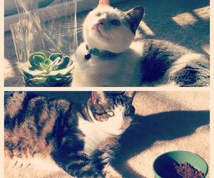 cats, plants, and cuties image