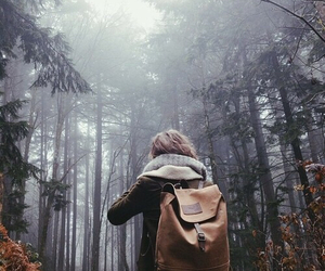 forest, travel, and nature image