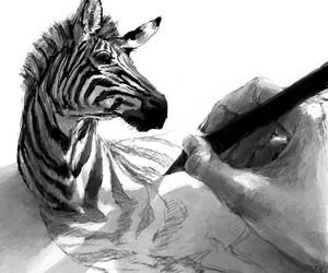 zebra, drawing, and art image