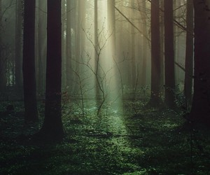 forest, trees, and fog image