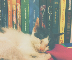 books, cat, and cute image