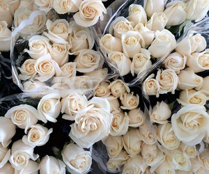 bouquet, roses, and white image
