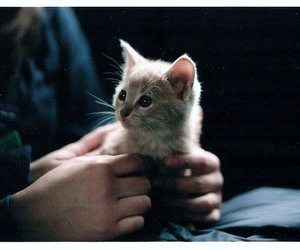 cat, hands, and k1000 image