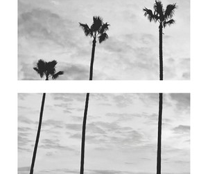 background, Collage, and black and white image