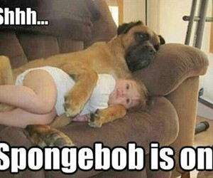 babies, funny, and funny dogs image