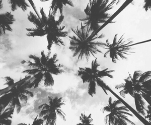black and white, palm trees, and wallpaper image