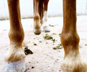 equestrian, horse, and legs image