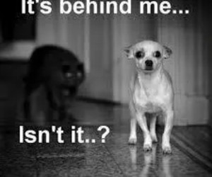 dog, funny, and cat image