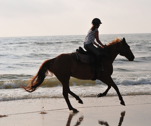 beach, contre jour, and equestrian image