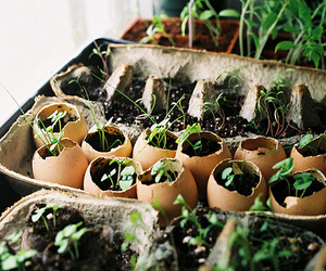 plants, nature, and eggs image