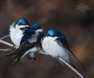 cute, birds, and blue image