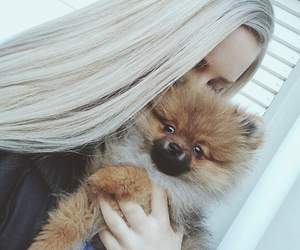 dog, POM, and pomeranian image