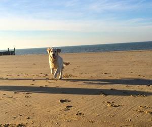 beach, dog, and golden retriever image