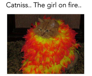 cat, funny, and katniss image