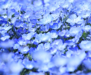 blue, flowers, and blue flowers image