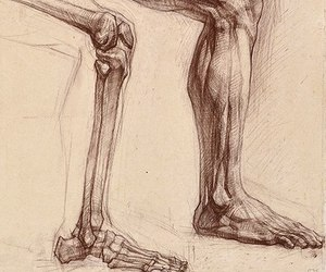 anatomy, drawing, and art image