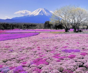 beautiful, places, and japón image