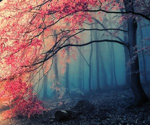 tree, pink, and forest image