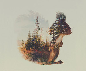 squirrel, animal, and art image