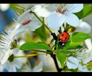 adorable, flower, and ladybird image