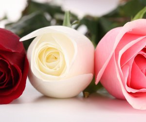 flowers, summer, and roses image