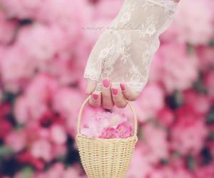 basket, flowers, and photography image