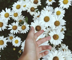 daisy, flowers, and hipster image