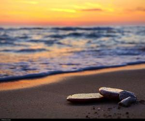 beach, sea, and evening image