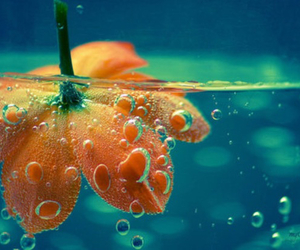 flowers, water, and bubbles image