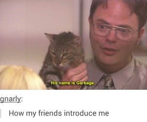 cat, funny, and garbage image