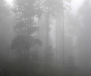dark, mystery, and nature image