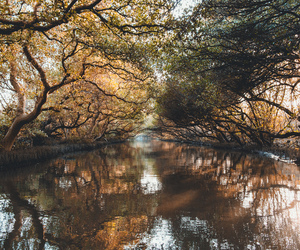 nature, trees, and water image