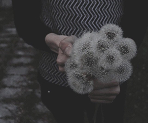 flowers, grunge, and dandelion image
