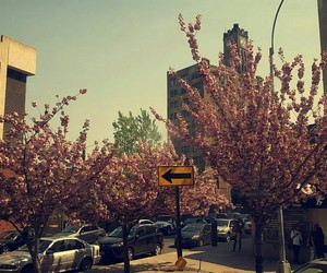 cherry blossoms, left, and new york city image