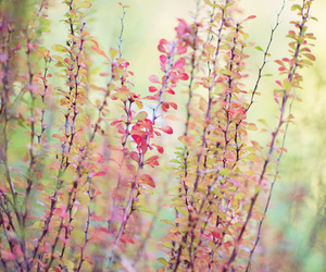 floral, nature photography, and vines image