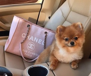 car, chanel, and fashion image