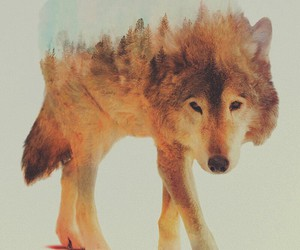 animals, art, and wolf image