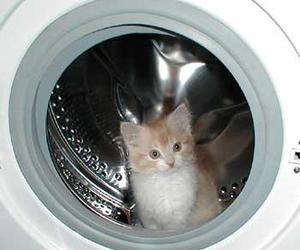 cat, kitten, and dryer image