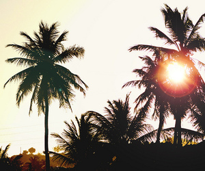sun, summer, and palms image