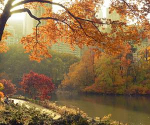 autumn, color, and rumunia image