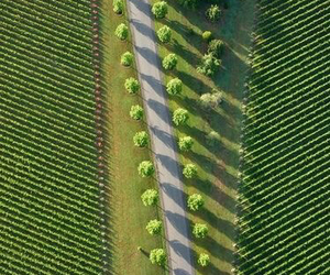 green, road, and trees image
