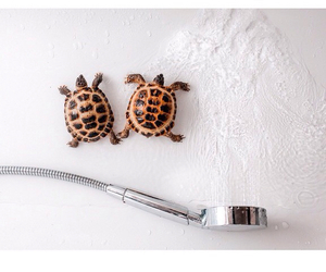 animals, cool, and tortoise image