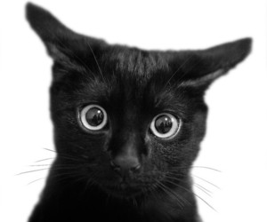 awesome, black, and black cat image